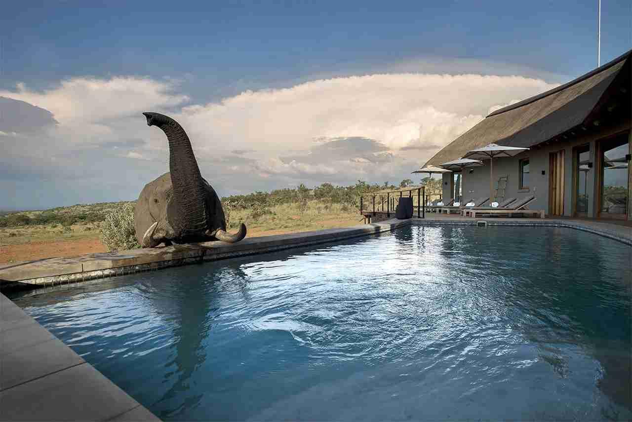 Photo courtesy of Mhondoro Safari Lodge and Villa