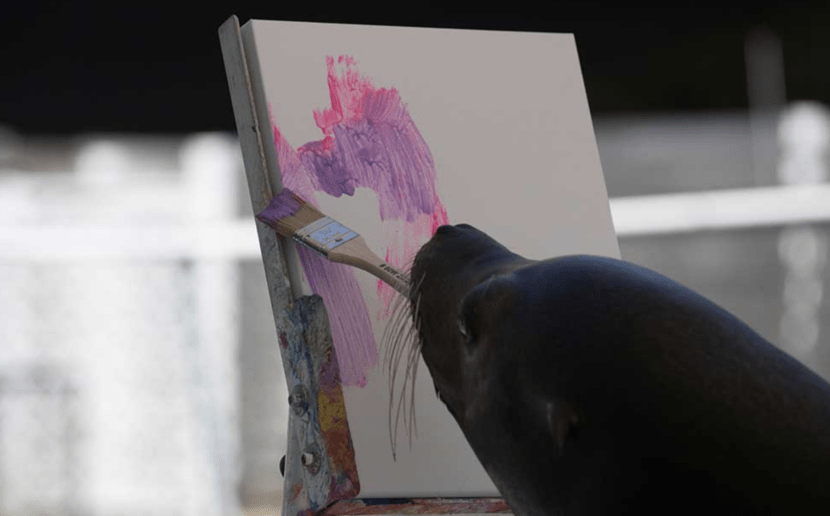 Add It to the Bucket List: Paint With Sea Lions in the Florida Keys