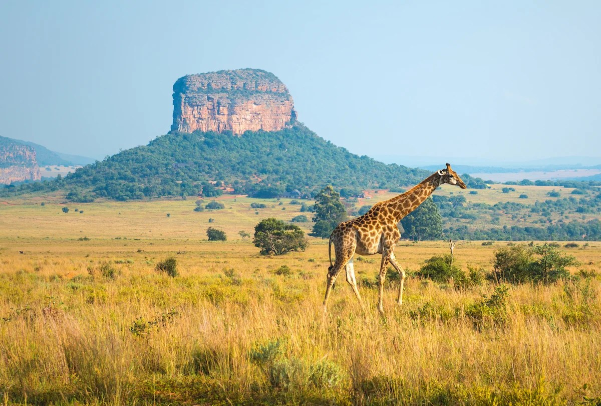 Deal Alert: Flights to Africa From $564 Round-Trip