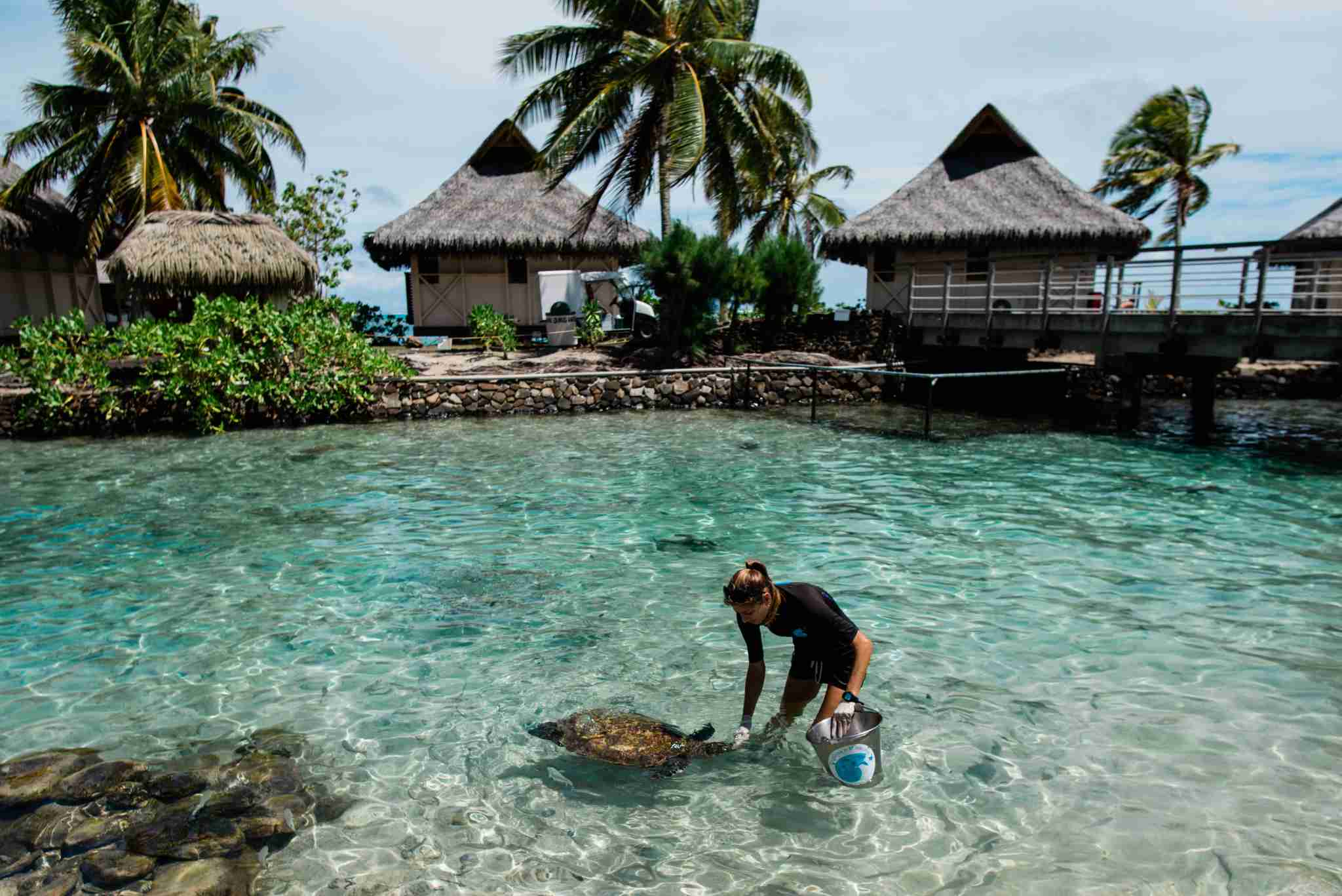 InterContinental Resort and Spa Moorea - turtle rehabilitation