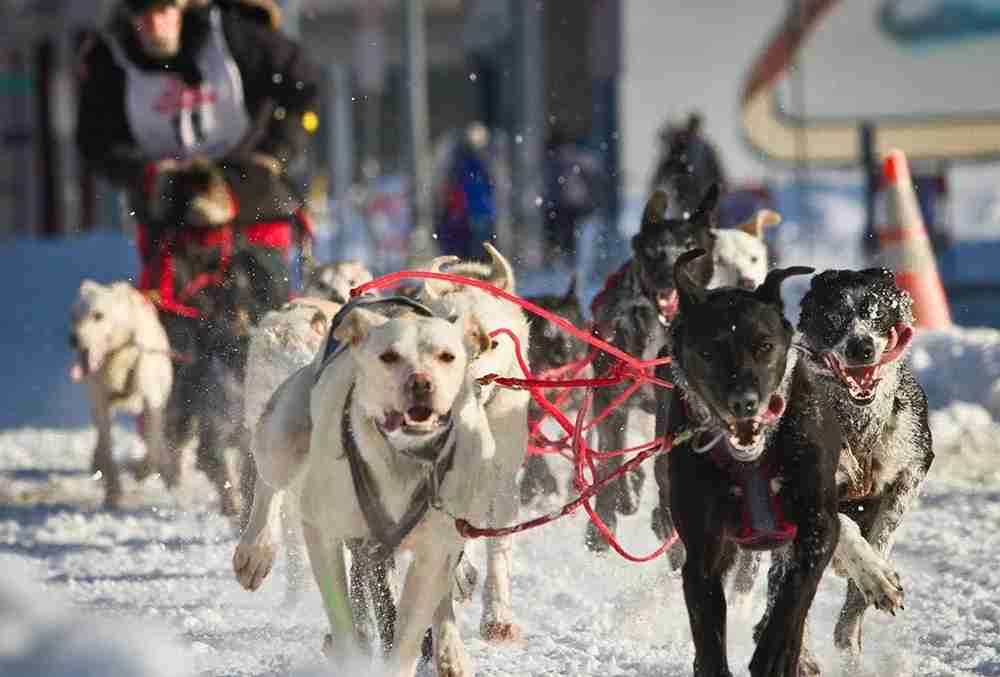 Fur Rendezvous, image courtesy of Greater Anchorage, Inc.