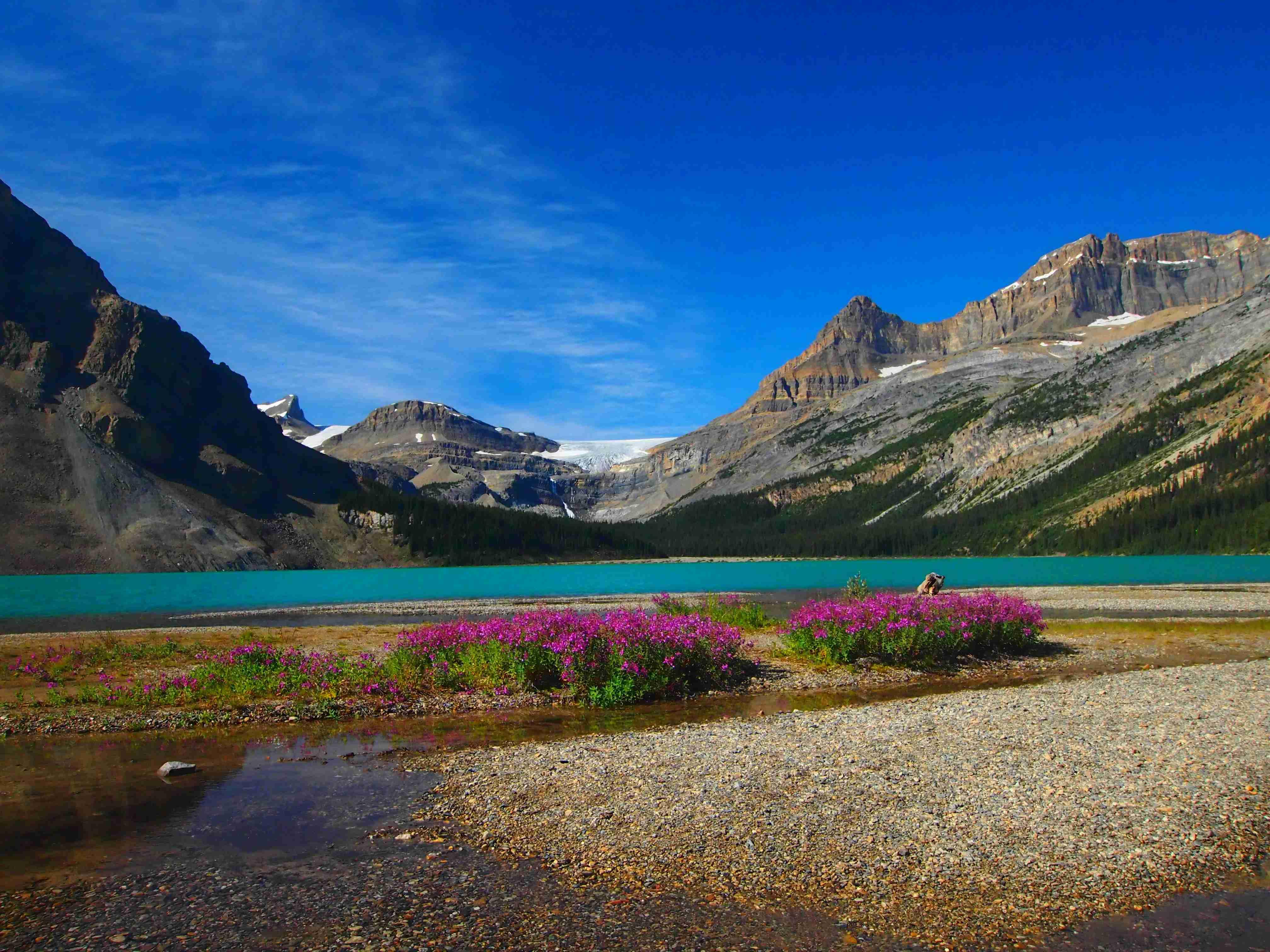 Bow Lake, Banff National Park, Alberta. Photo: Elen Turner