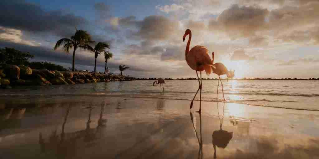 (Photo courtesy of The Renaissance Aruba)