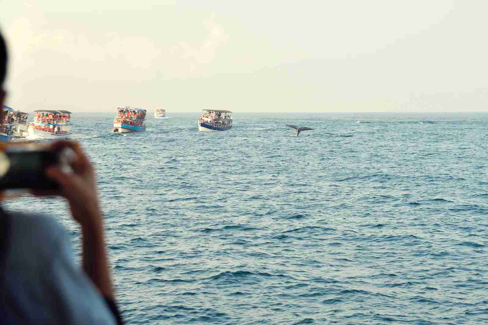 Whale-watching in Sri Lanka. (Photo via Getty Images)