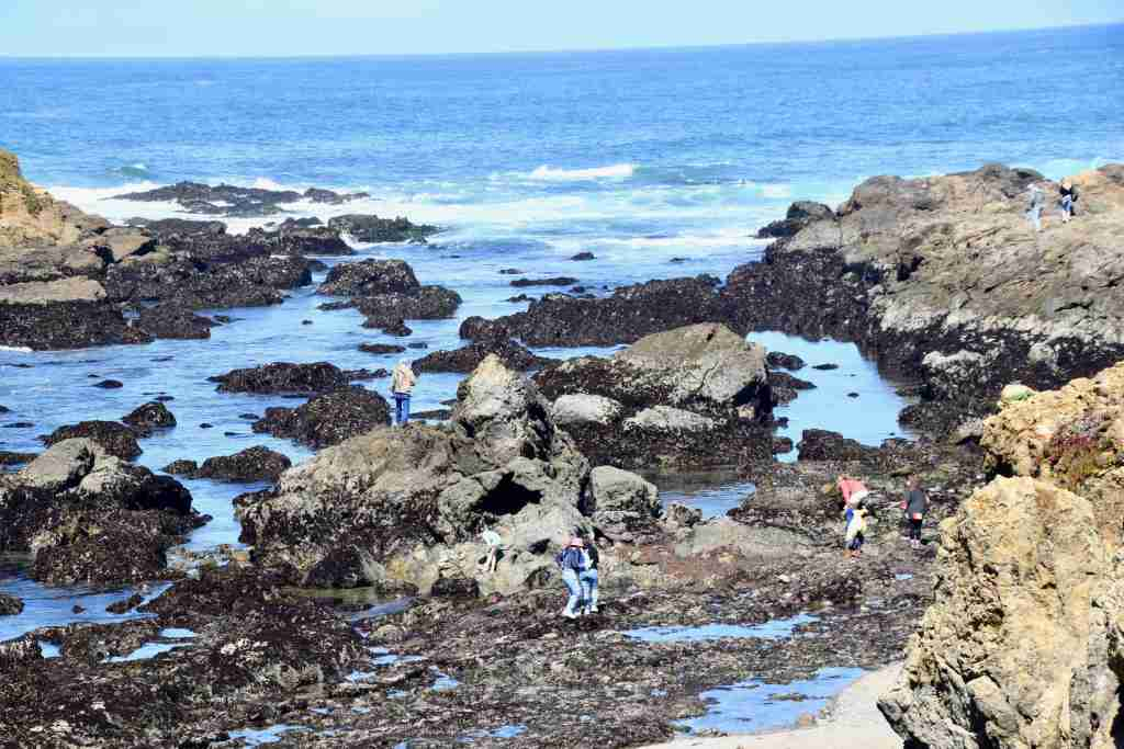 Mendocino tide pools