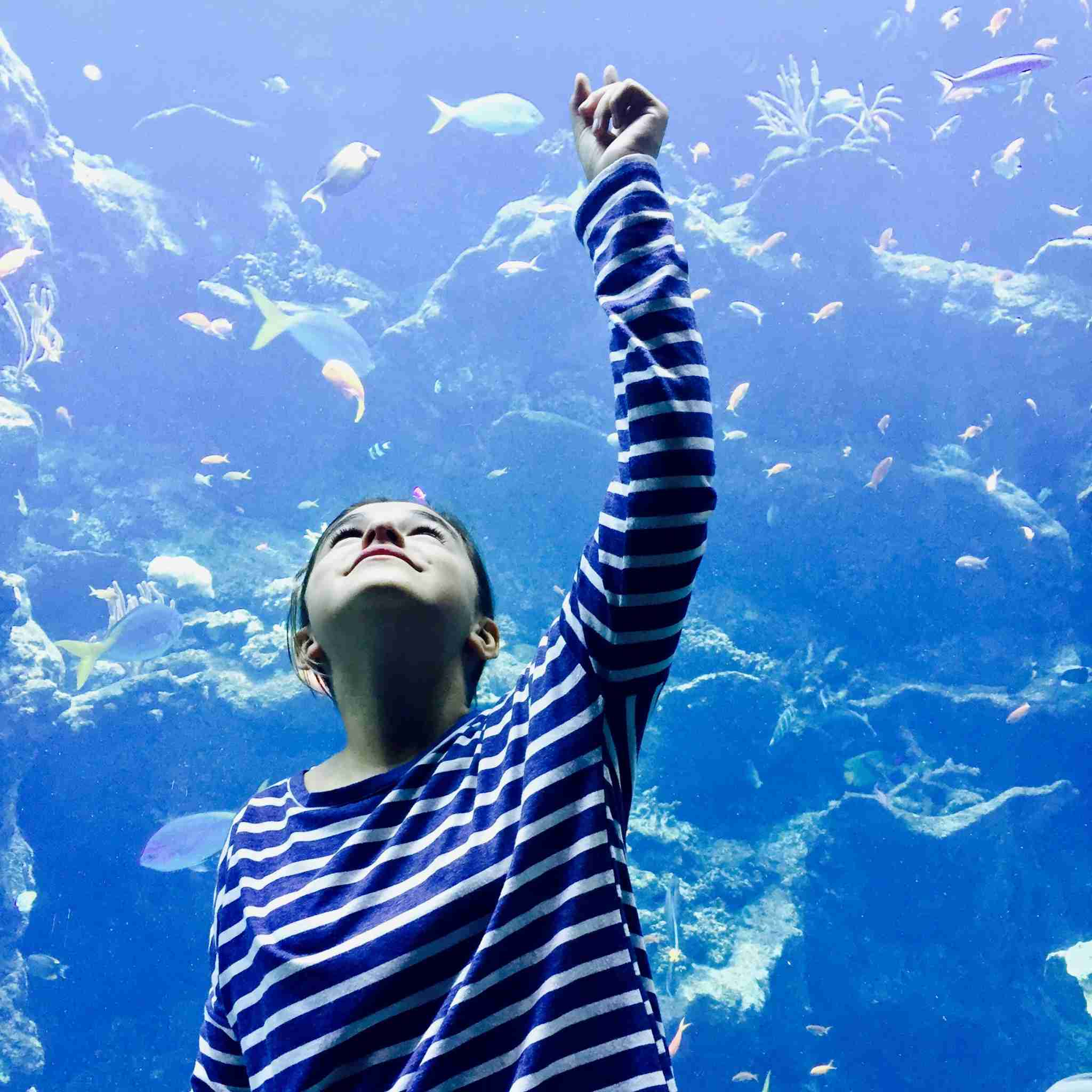 Along the hike in Golden Gate Park, stop into Steinhart Aquarium for some ocean immersion.