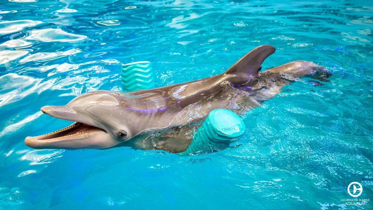 The Clearwater Marine Aquarium. (Photo courtesy of Visit St. Pete/Clearwater)
