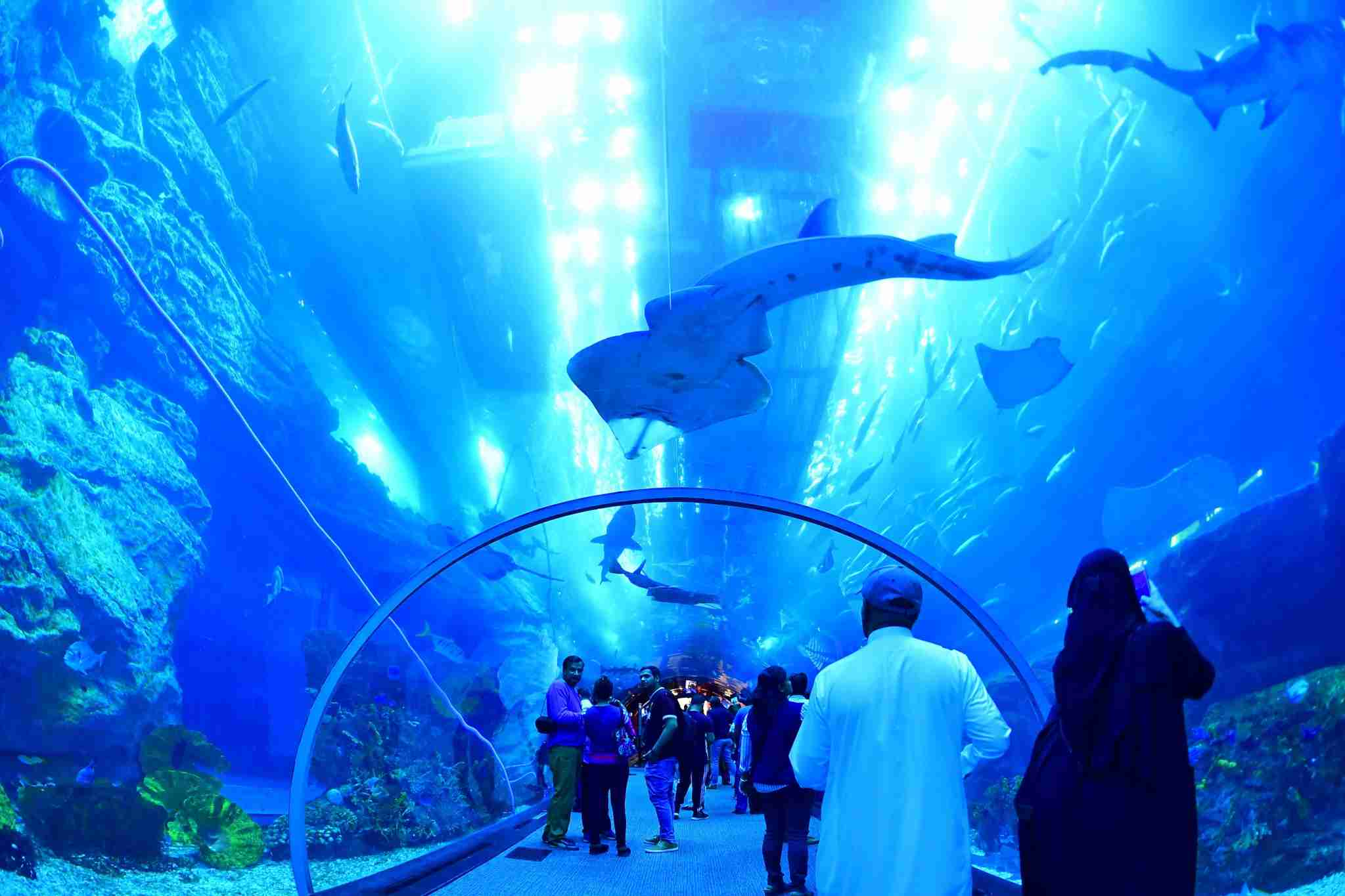TOPSHOT - Tourists and locals visit the Dubai Mall aquarium in downtown Dubai on January 2, 2019. (Photo by GIUSEPPE CACACE / AFP) (Photo credit should read GIUSEPPE CACACE/AFP/Getty Images)