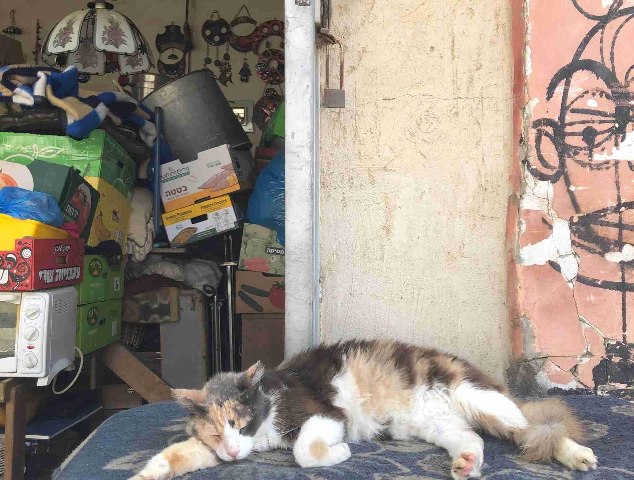 A cat naps at the flea market in Jaffa. Photo by Lori Zaino.
