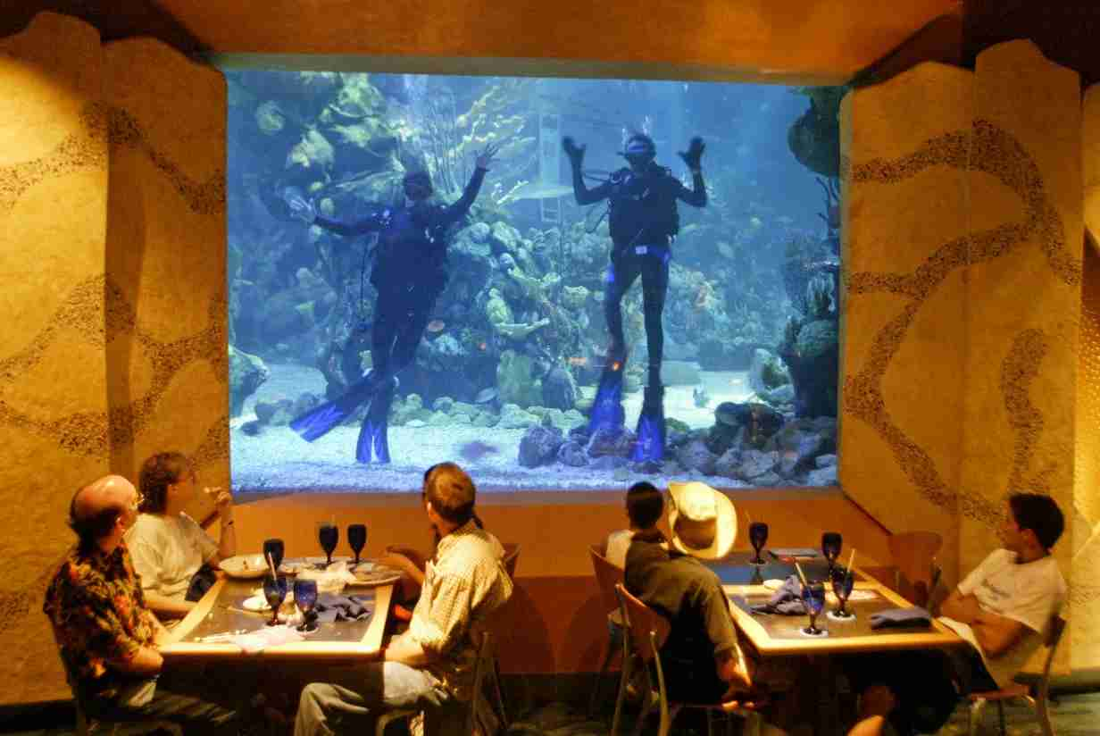 walt disney world coral reef restaurant