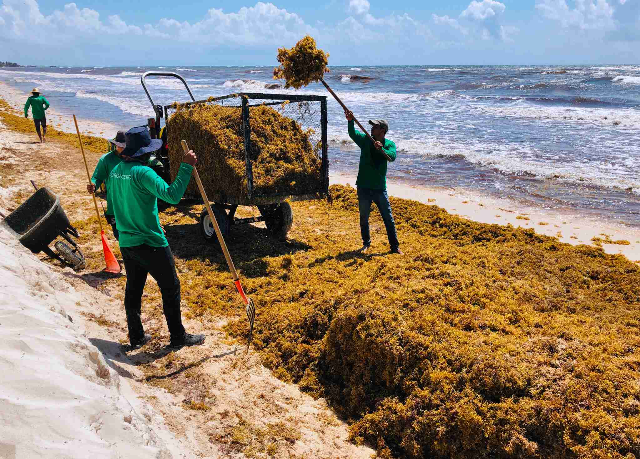 Workers remove seaweed from a beach along Mexico
