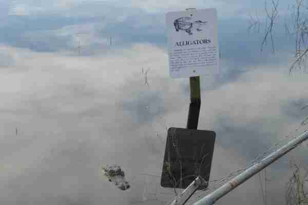 Traveling through Florida, you're likely to encounter many alligator warning signs. Those signs aren't lying, but you leave the gators alone, you'll be fine.