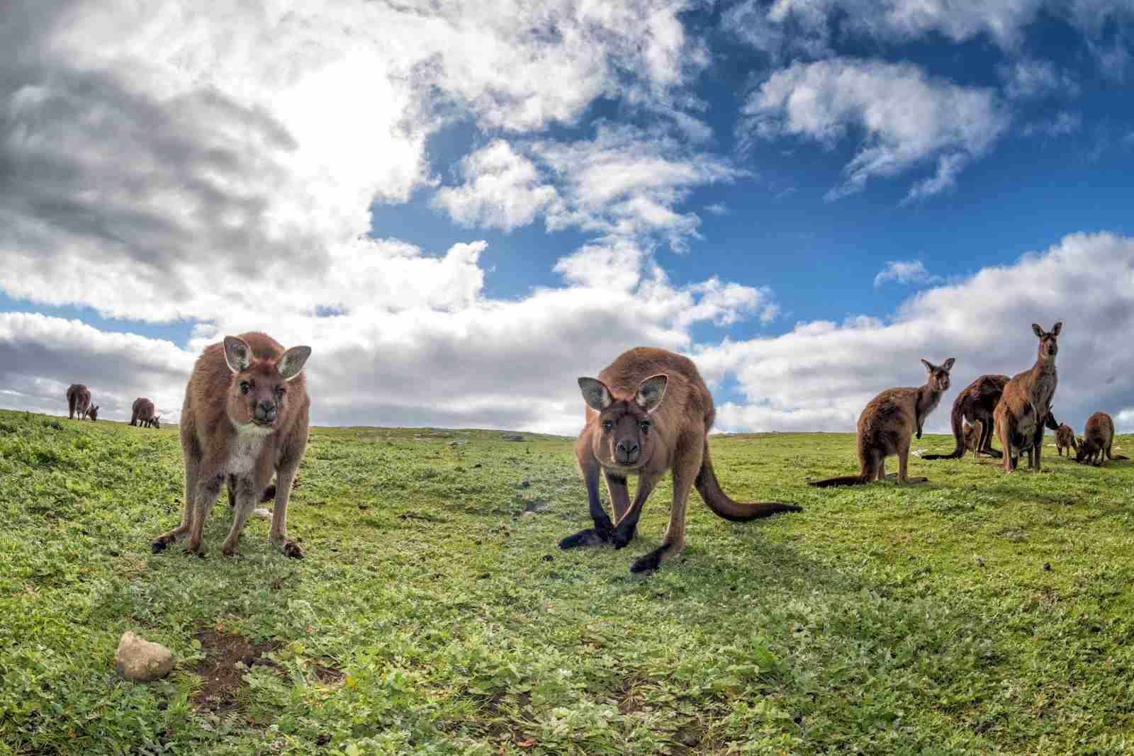 Kangaroo Island. (Photo by Andrea Izzotti/Shutterstock)