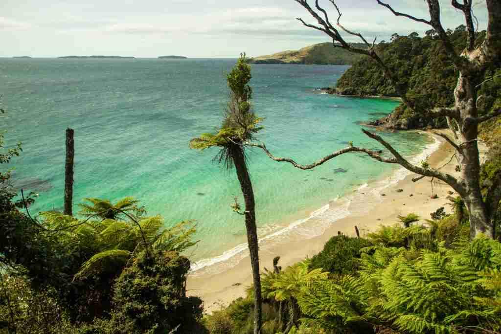 Rakiura National Park. (Photo via Shutterstock)