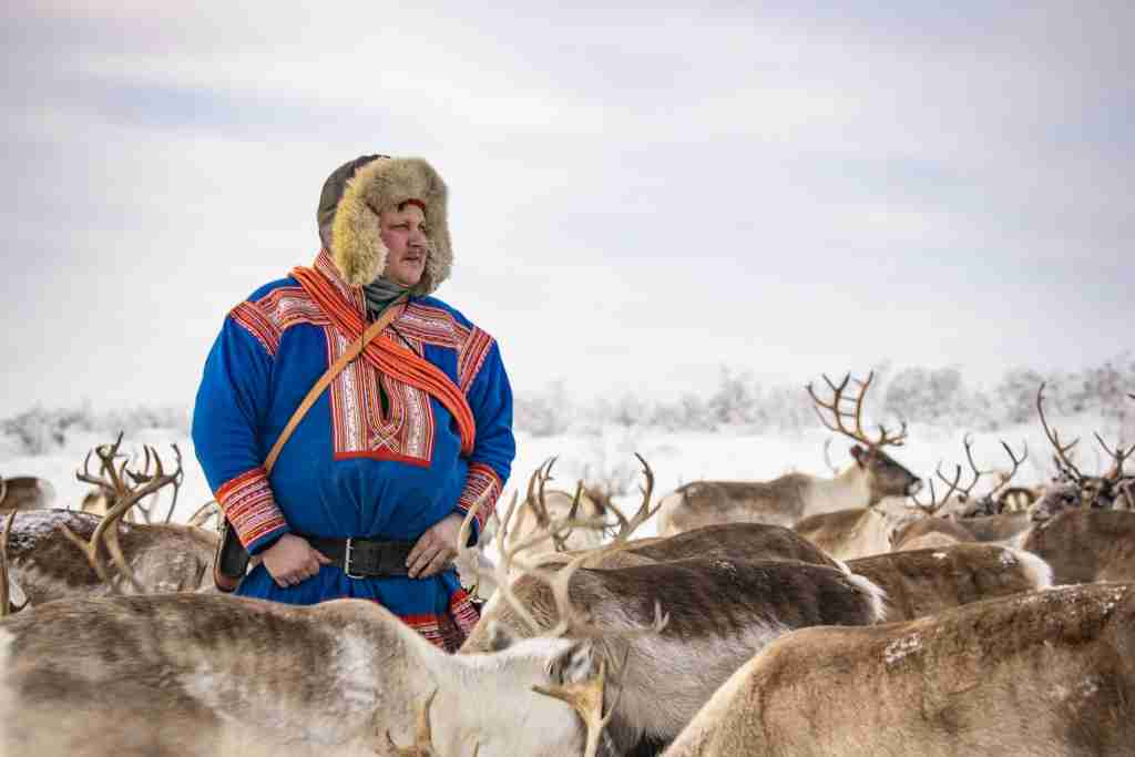 Norway reindeer