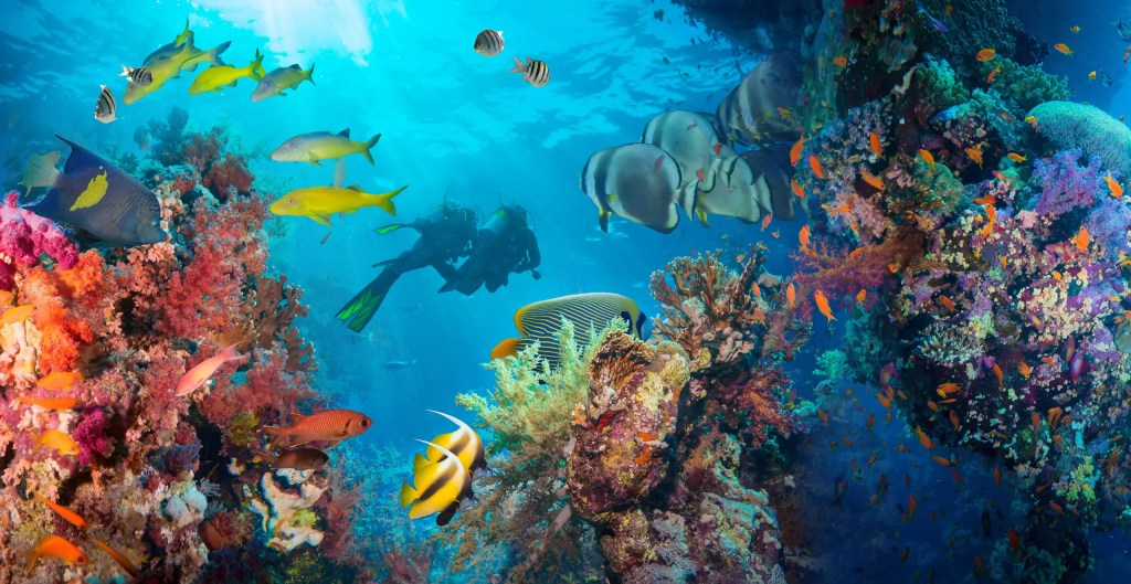 Everything you need to know about scuba diving in the Maldives
