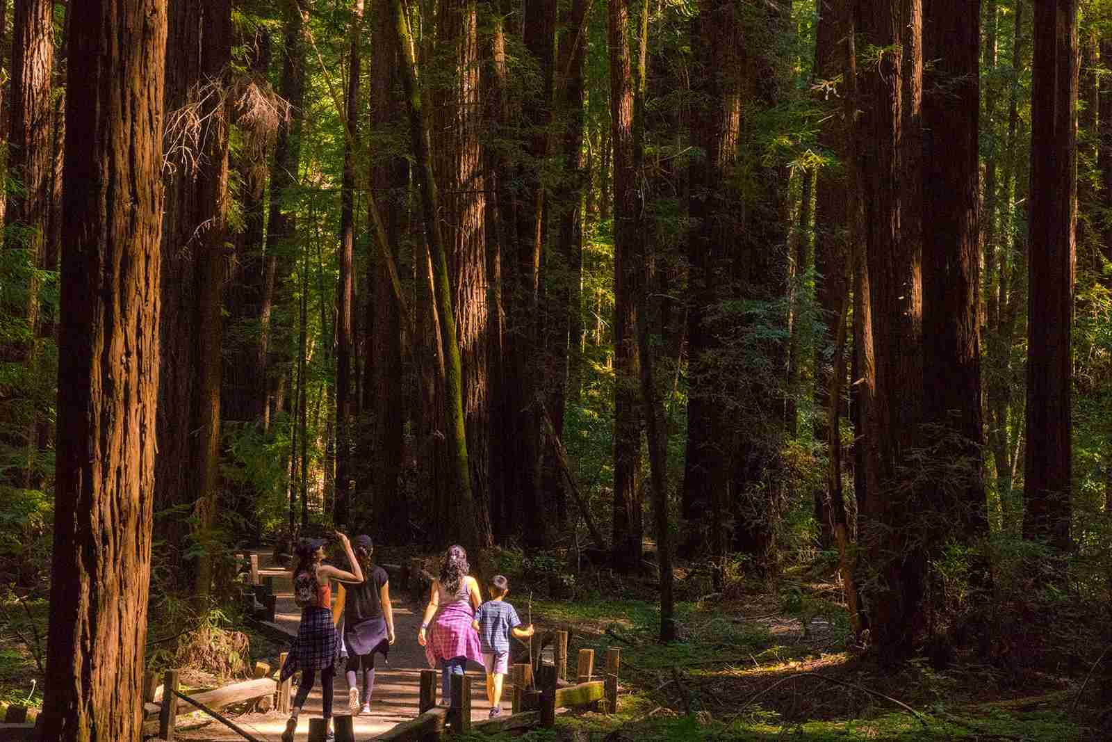 Armstrong Redwoods State Natural Reserve in Sonoma (Photo courtesy of Sonoma County Tourism)