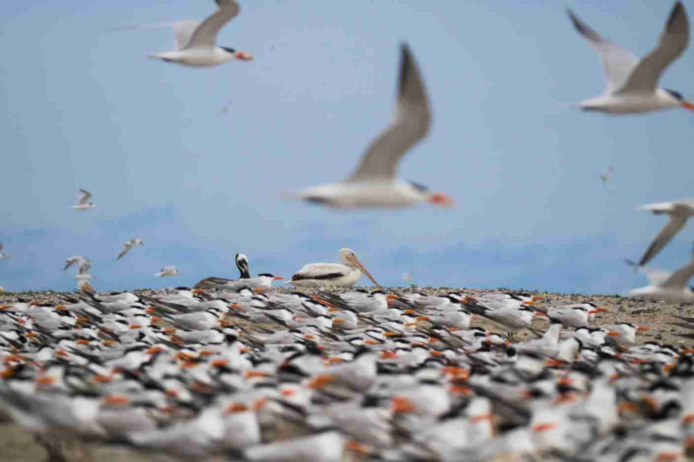 Great blue herons, among other birds, inhabit Hilton Head Island. (Photo by Forest Simon/Unsplash)
