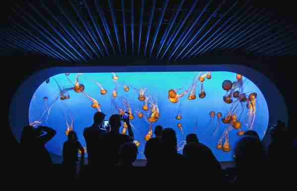 Monterey Bay Aquarium. (Photo by Denny Soetiono/EyeEm/Getty Images)