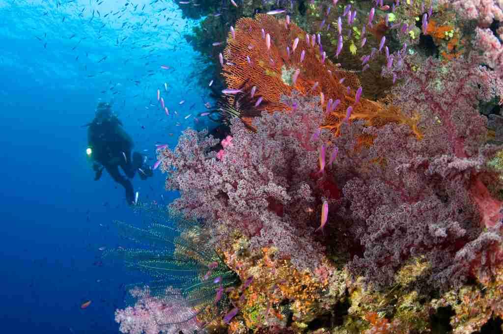 Namena Marine Reserve