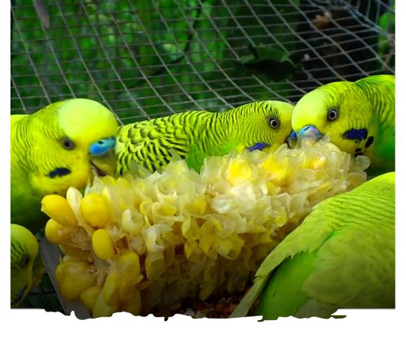 al ain zoo offer experiences budgiefeeding uae