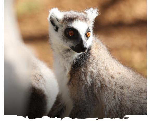 al ain zoo offer experiences lemur walk uae