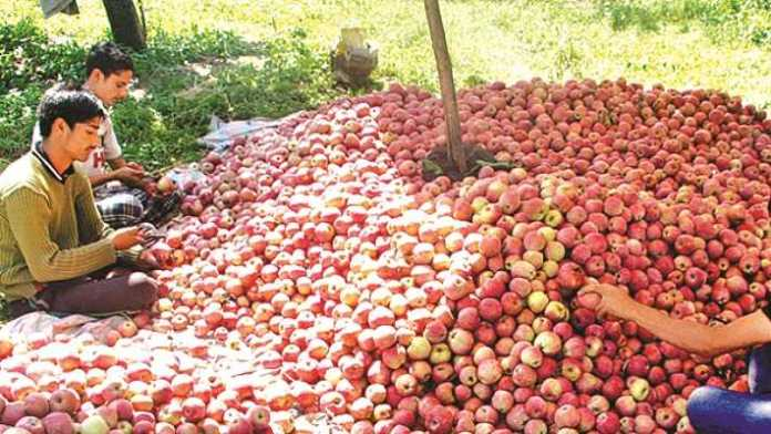 Untimely snowfall in Kashmir causes Rs 500 crore loss to fruit industry