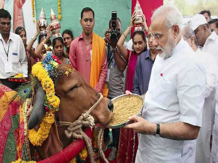 Stray cows a holy nightmare for BJP