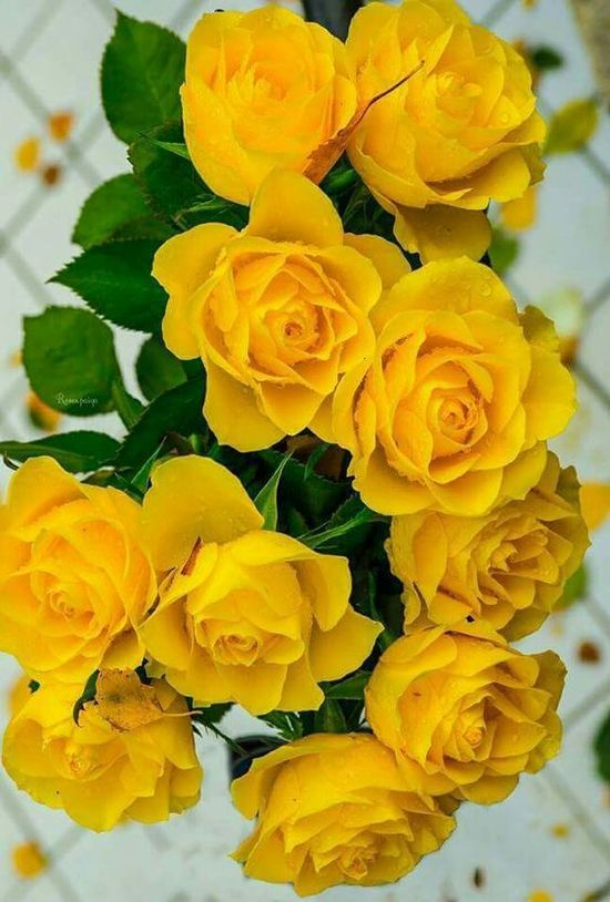 Bouquet of yellow roses, for friendship.