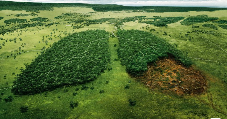 Physicists find deforestation has 90% chance of causing irreparable catastrophic societal collapse.