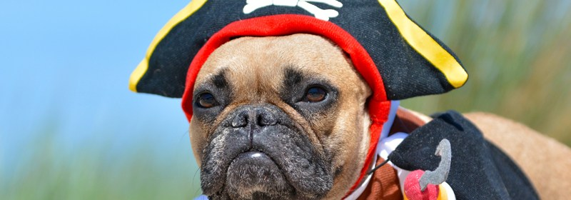 bulldog dressed up as a pirate