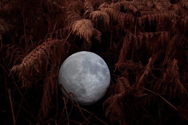 The moon is nestled in bracken