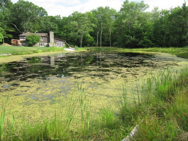Small Pond Management