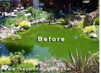 Pond Design Gone Wrong  The Pond Digger