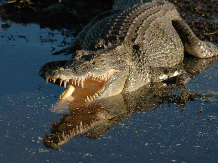 crocodile,girl,friend,river