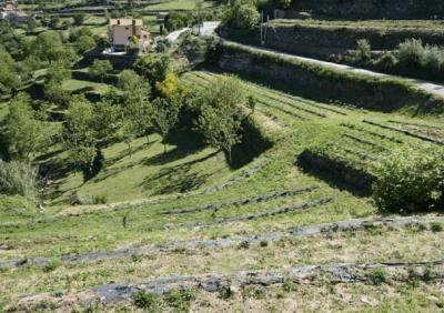 Quinta in Resende Douro Valley