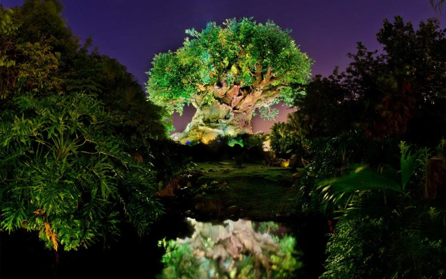 disney-animal-kingdom-night0416