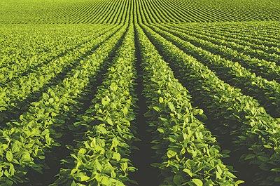 campos-sembrados