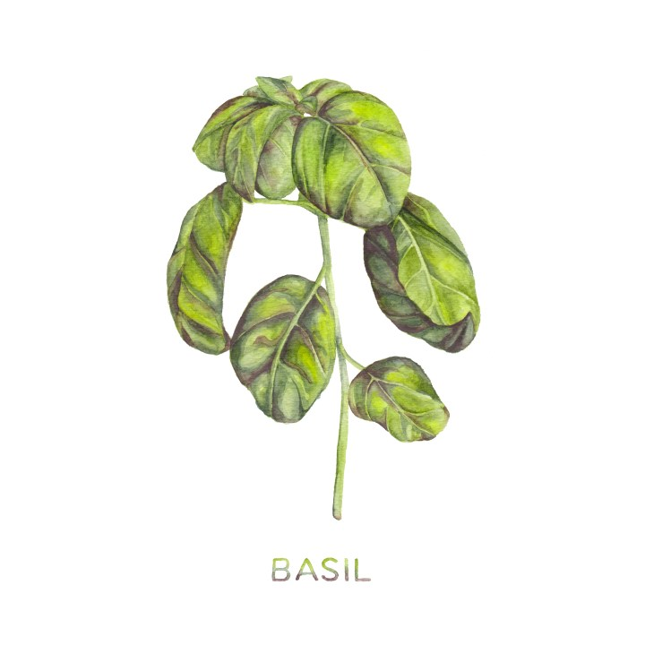 Free Watercolor Basil Art Printable | The Postman's Knock