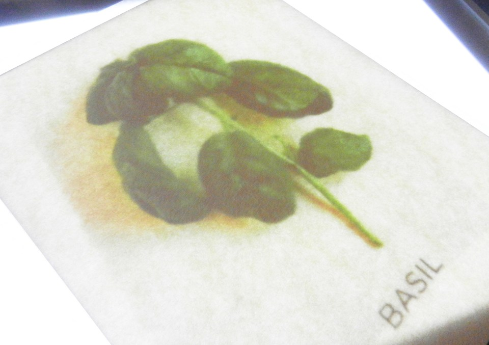 Herbal Watercolor Tutorial + a Free Printable | The Postman's Knock