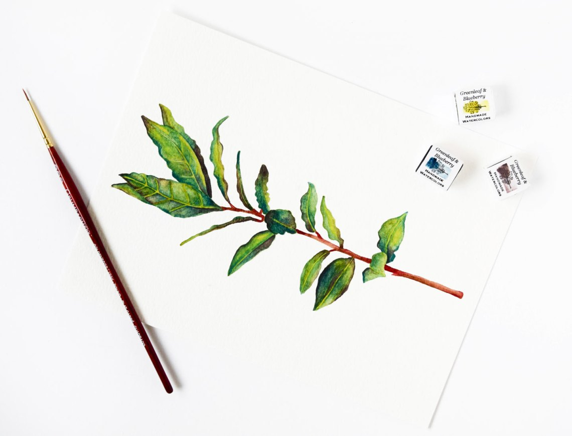 Bay Leaf Watercolor Illustration | The Postman's Knock