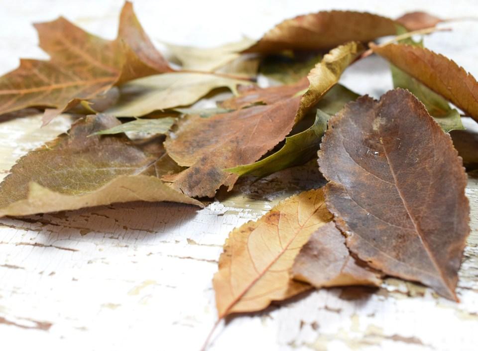 Naked Autumn Leaves