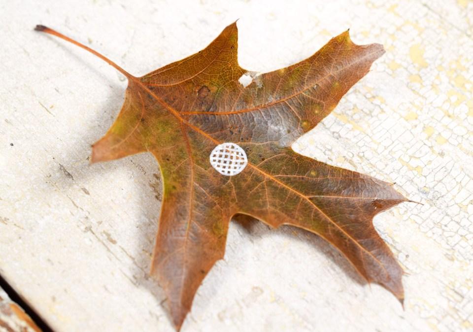 Step 1: Henna Flower Leaf Motif