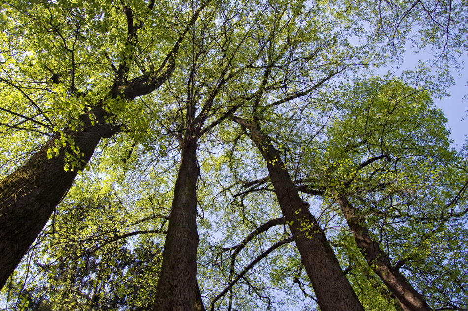 Five Community Building Lessons from Trees