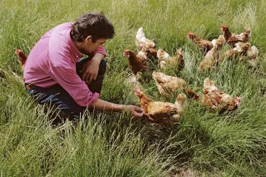 creating-your-own-custom-chicken-feed-mix