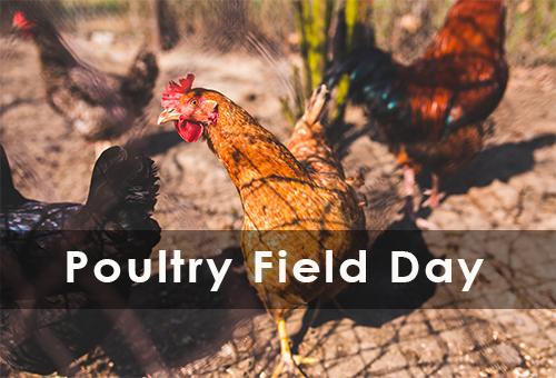 Free Range Poultry Field day