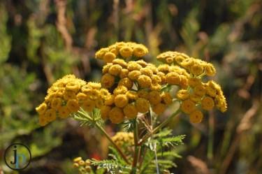 Yellow Specks