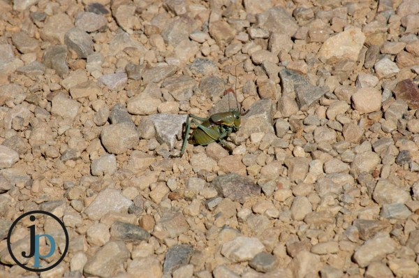 Big Grasshopper Thingy