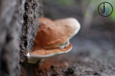 Another Mushroom - See lots of little things we don't see when we are running.