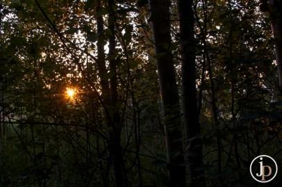 Love the Sun Flares